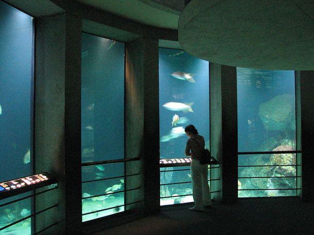 Baltimore_Aquarium_-_Big_tank