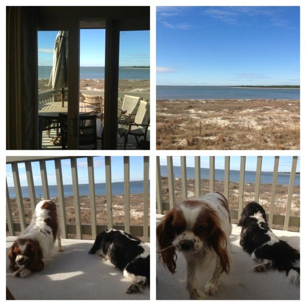 sunbathers on the deck
